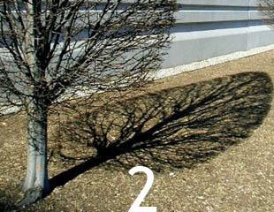 Cột điện – Bóng cây